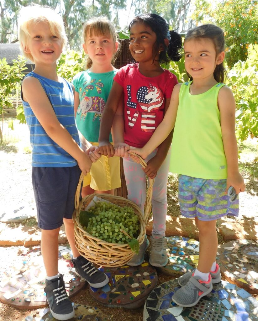 Children harvesting grapes showing nature-based learning